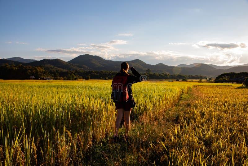 Mujer hermosa del viajero con la mochila en campos del arroz en Tailandia fotos de archivo