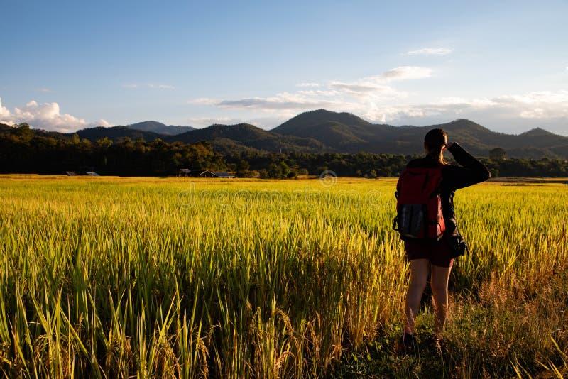 Mujer hermosa del viajero con la mochila en campos del arroz en Tailandia fotos de archivo libres de regalías