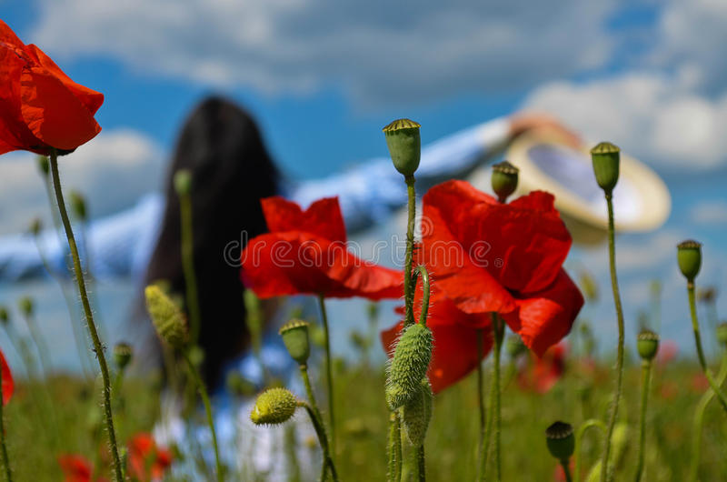 Mujer hermosa en el campo de la amapola de flores imágenes de archivo libres de regalías