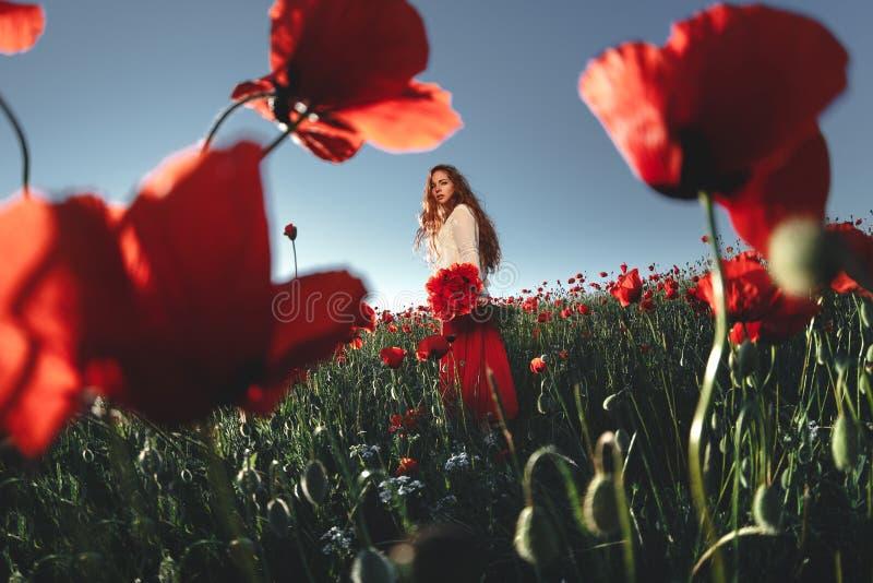 Mujer hermosa en un campo de la amapola foto de archivo