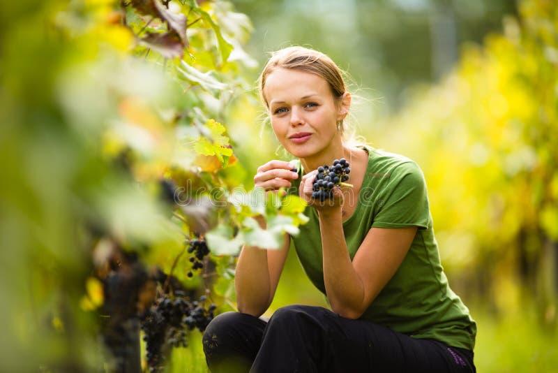 Mujer hermosa en viñedo imagen de archivo