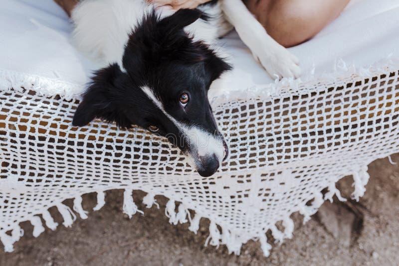 Mujer hermosa joven que se sienta en la hamaca con su perro del border collie al aire libre Forma de vida de la diversión y del v fotos de archivo