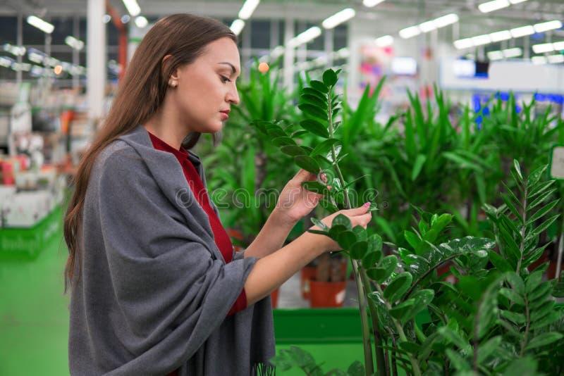 Mujer hermosa que compra plantas verdes de la flor en la floristería fotos de archivo libres de regalías