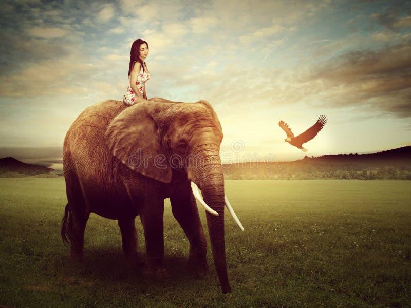 Mujer hermosa que se sienta en un elefante imágenes de archivo libres de regalías