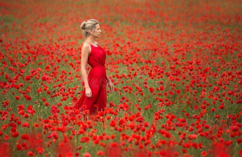 Mujer hermosa y delgada en vestido y campo rojos imagen de archivo libre de regalías