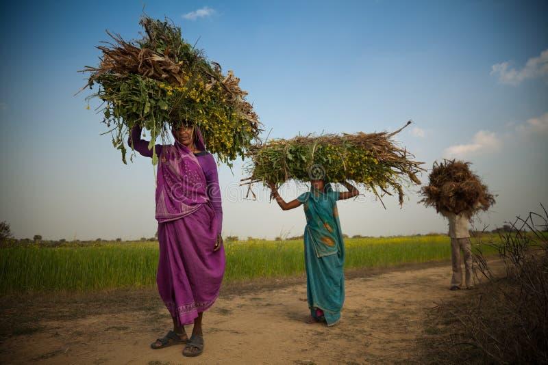 Mujer india del aldeano que lleva la hierba verde foto de archivo