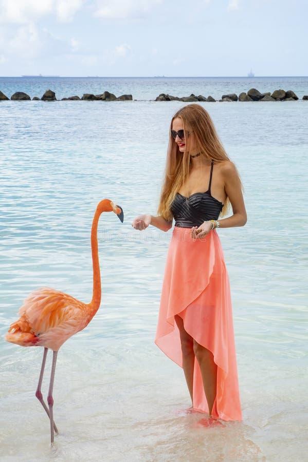 Mujer joven con el pelo rubio largo en bikini negro y el abrigo rosado que alimentan flamencos rosados en la playa #1 fotos de archivo