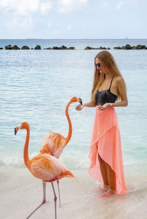 Mujer joven con el pelo rubio largo en bikini negro y el abrigo rosado que alimentan flamencos rosados en la playa #2 fotografía de archivo