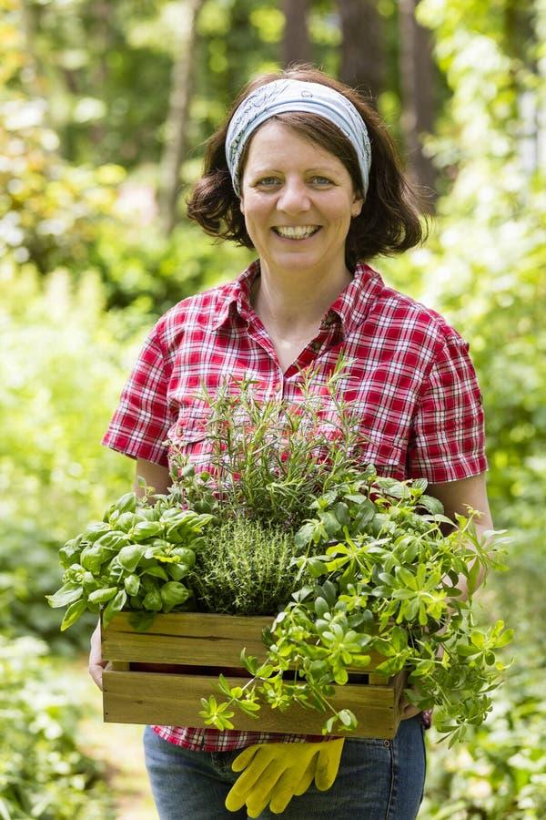 Mujer joven con las hierbas en a foto de archivo