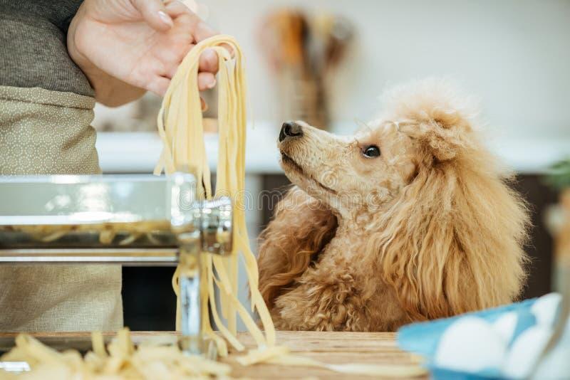 Mujer joven con su perro que hace pastas hechas a mano imagenes de archivo