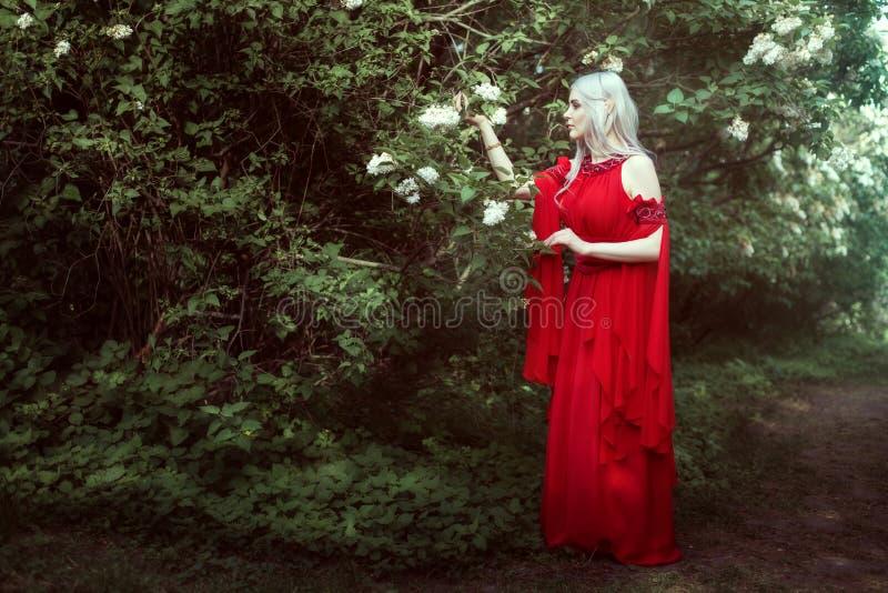Mujer joven del duende en un bosque de hadas fotografía de archivo libre de regalías