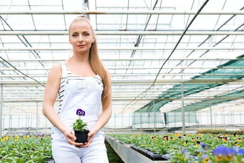 Mujer joven del jardinero que se coloca en un invernadero, sosteniendo una flor fotos de archivo