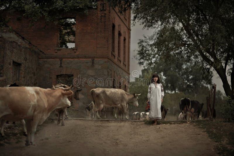 Mujer joven en la manada nacional de la ropa vintage de la CA que camina de las vacas foto de archivo