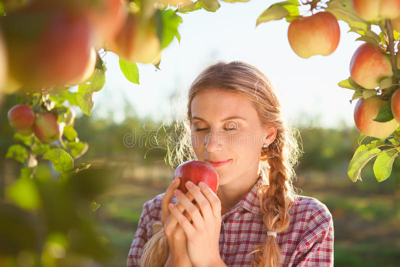 Mujer joven hermosa que escoge manzanas orgánicas maduras fotos de archivo libres de regalías