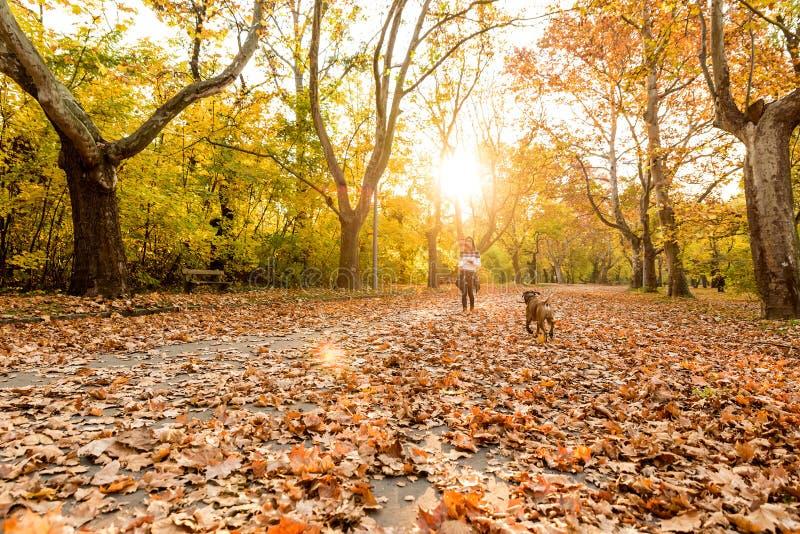 Mujer joven hermosa que juega con su perro en el bosque fotografía de archivo libre de regalías
