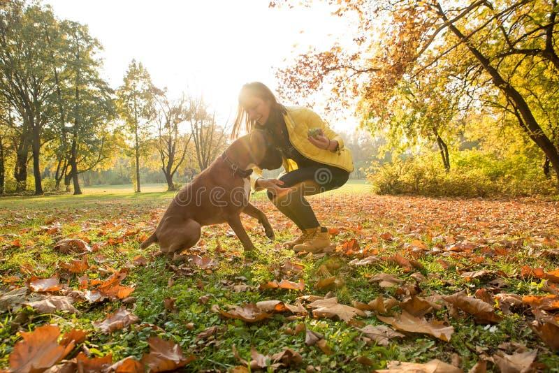 Mujer joven hermosa que juega con su perro en el bosque fotos de archivo libres de regalías