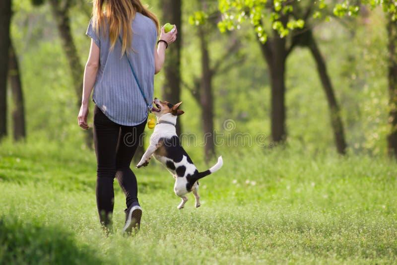 Mujer joven que camina con un perro de salto que juega el entrenamiento foto de archivo