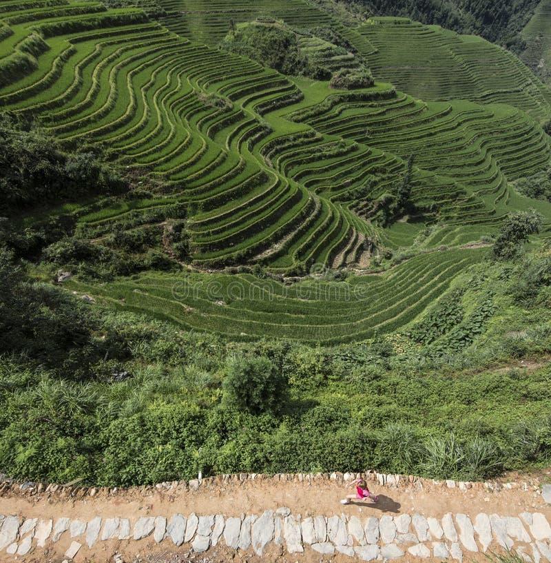 Mujer joven que corre a lo largo de campo chino del arroz fotografía de archivo libre de regalías