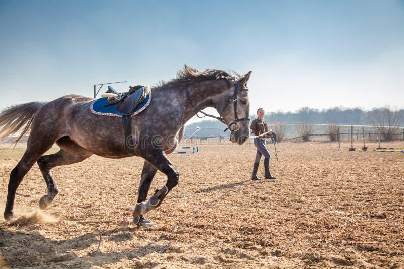 Mujer joven que entrena a un caballo fotos de archivo libres de regalías