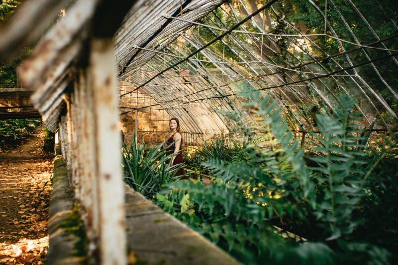 Mujer joven que explora un invernadero con los cycads imagen de archivo libre de regalías