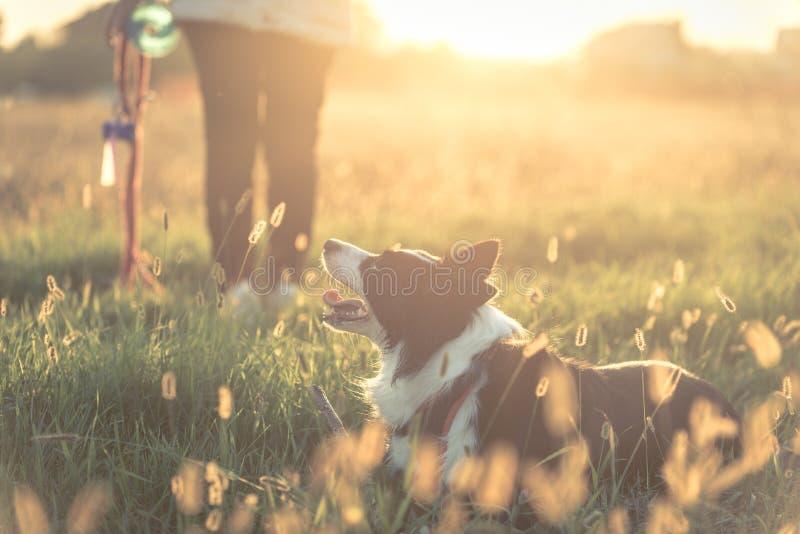 Mujer joven que juega con su perro del border collie fotos de archivo libres de regalías