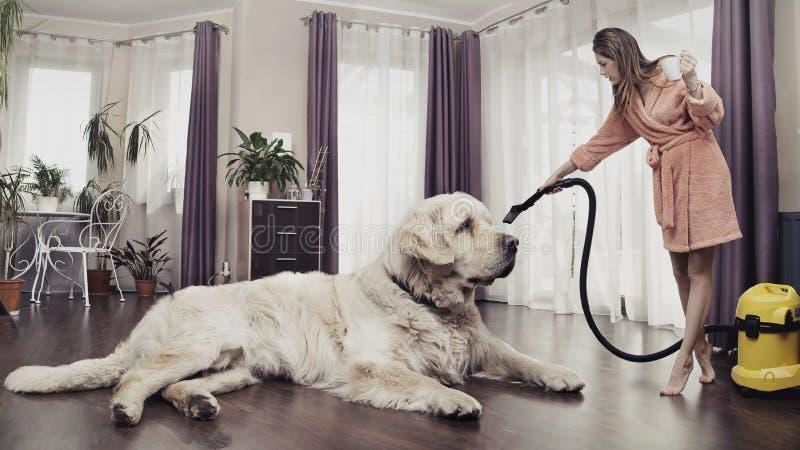 Mujer joven que limpia el perro grande foto de archivo