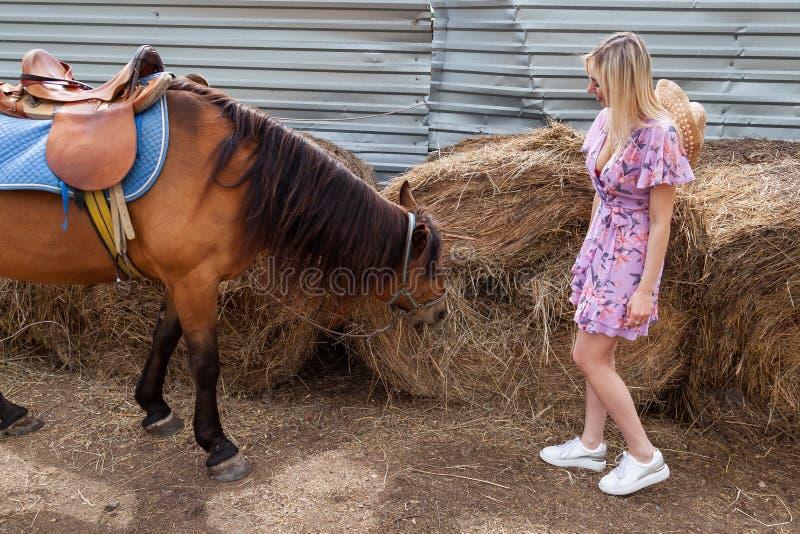 Mujer joven que mira en un caballo marrón antes de un paseo que come el heno cerca del pajar en un día claro del verano imagen de archivo libre de regalías