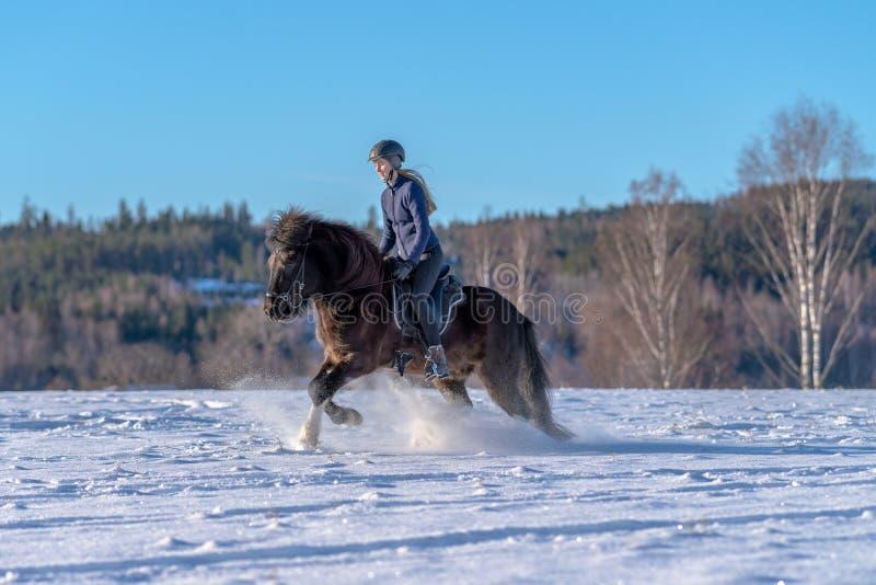 Mujer joven que monta su caballo islandés en nieve profunda y luz del sol fotos de archivo libres de regalías