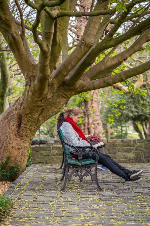 Mujer joven que se sienta en banco debajo de un árbol que lee un libro imagen de archivo