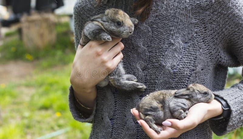 Mujer joven que sostiene dos pequeños conejos en sus manos imagen de archivo libre de regalías