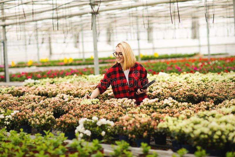 Mujer joven que trabaja en invernadero Flores atractivas del control y de la cuenta de la muchacha, usando la tableta foto de archivo libre de regalías