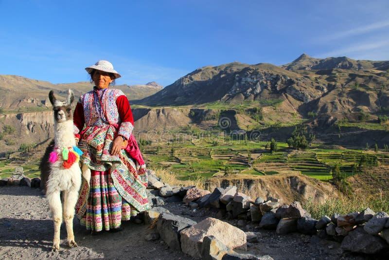 Mujer local con la llama que se coloca en el barranco de Colca en Perú foto de archivo libre de regalías