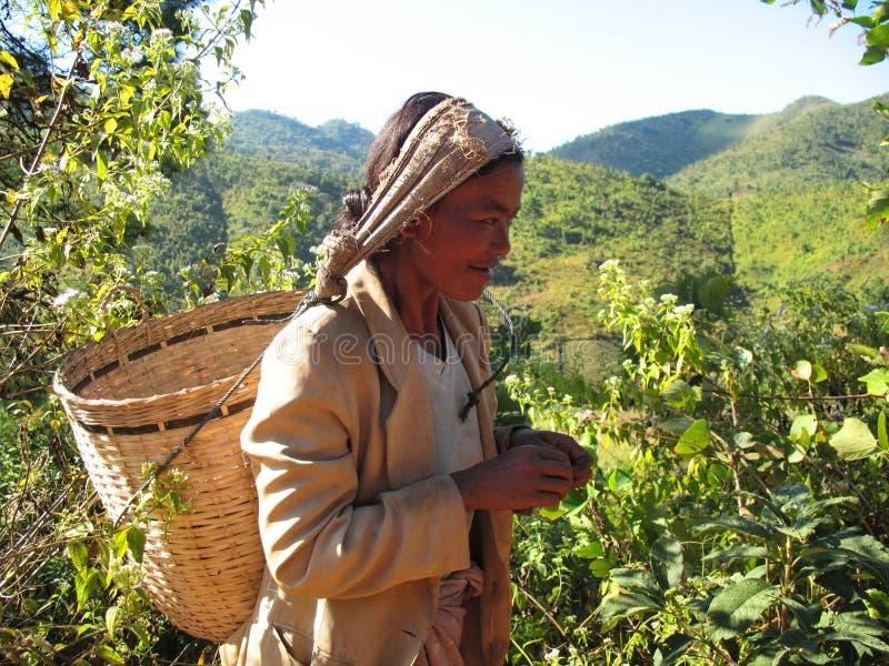 Mujer local que trabaja en el campo no lejos de Kalaw imágenes de archivo libres de regalías