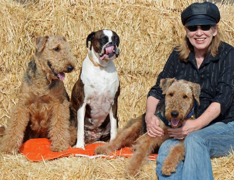 Mujer madura sonriente feliz en las balas de heno que abraza los perros caseros fotos de archivo