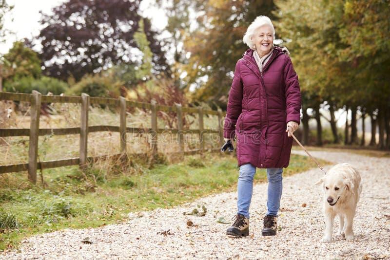 Mujer mayor activa en la trayectoria de Autumn Walk With Dog On a través del campo imagen de archivo