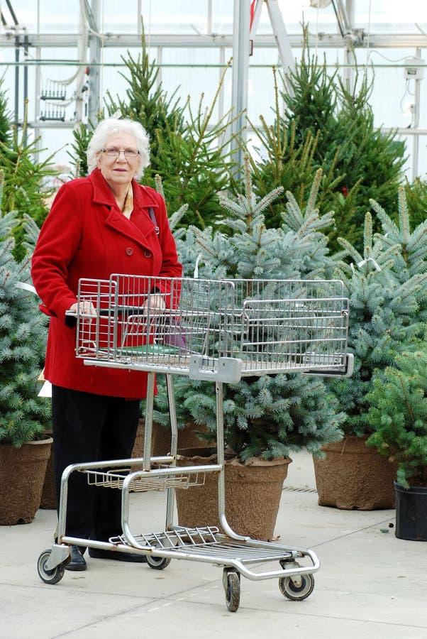 Mujer mayor con el árbol de navidad de las compras del carro fotografía de archivo libre de regalías