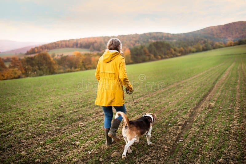 Mujer mayor con el perro en un paseo en una naturaleza del otoño imagenes de archivo