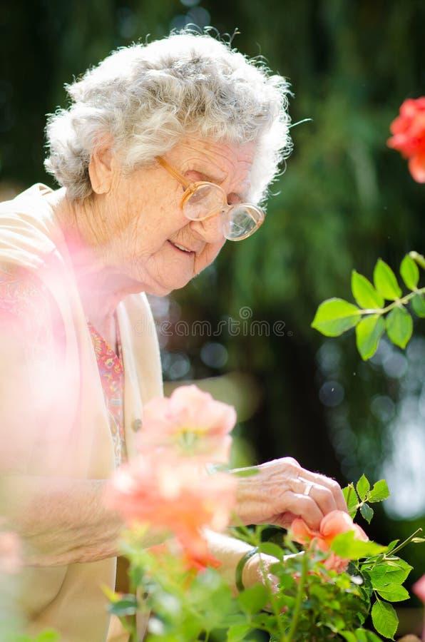 Mujer mayor con las rosas del jardín imagen de archivo libre de regalías