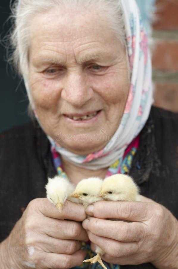 Mujer mayor con los pollos amarillos imágenes de archivo libres de regalías