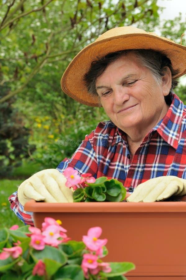 Mujer mayor - cultivando un huerto fotos de archivo