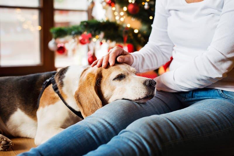 Mujer mayor irreconocible con su perro en el árbol de navidad fotos de archivo