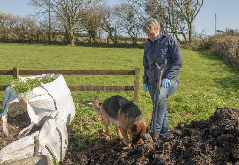 Mujer mayor que cultiva un huerto con el Alsatian del animal doméstico fotos de archivo libres de regalías