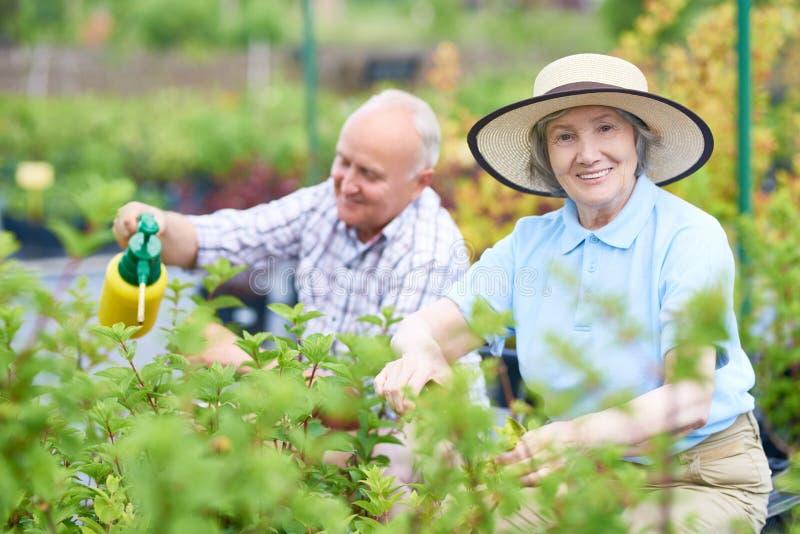 Mujer mayor que cultiva un huerto en la plantación foto de archivo