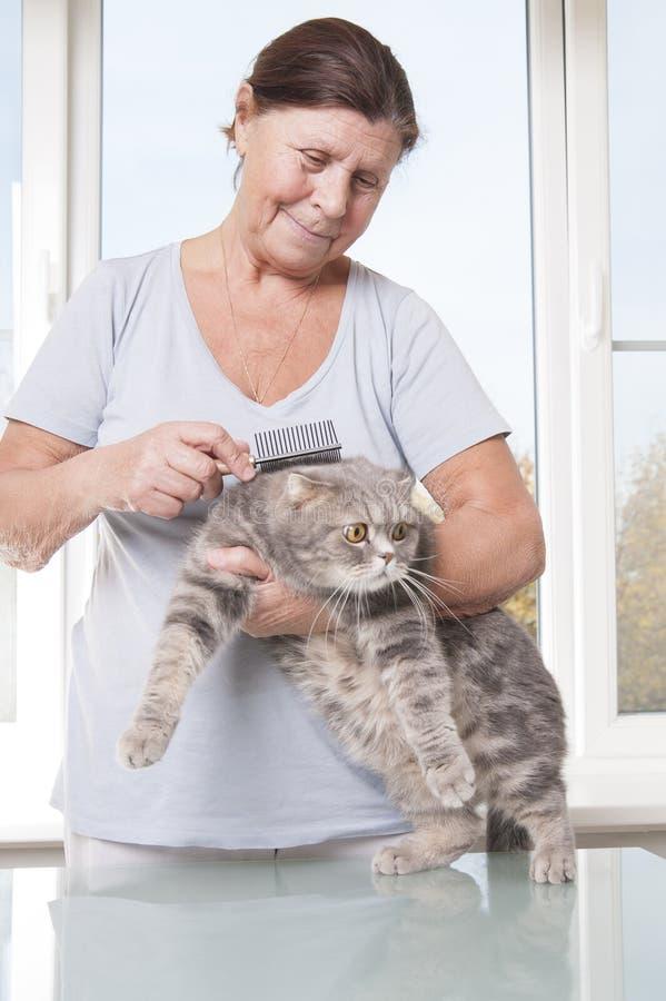 Mujer mayor que peina el doblez del escocés de la raza del gato fotografía de archivo libre de regalías