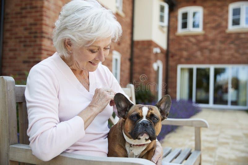 Mujer mayor que se sienta en banco con el dogo francés del animal doméstico en la instalación viva ayudada imagen de archivo
