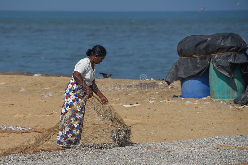 Mujer mayor que seca pequeños pescados en la playa fotos de archivo