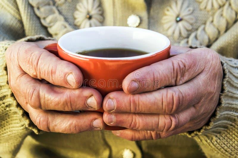 mujer mayor que sostiene una taza de té fotografía de archivo