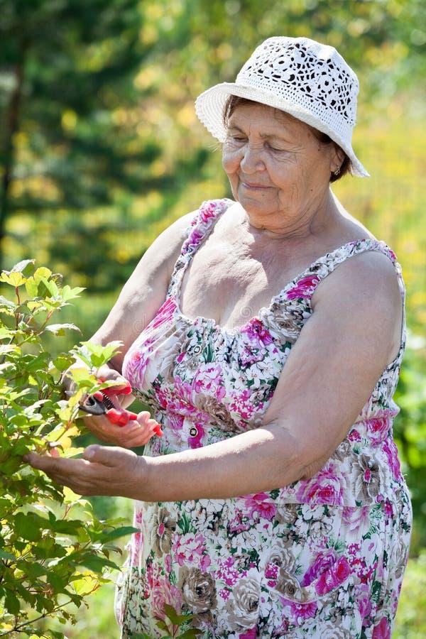 Mujer mayor que trabaja con el pruner en jardín fotos de archivo