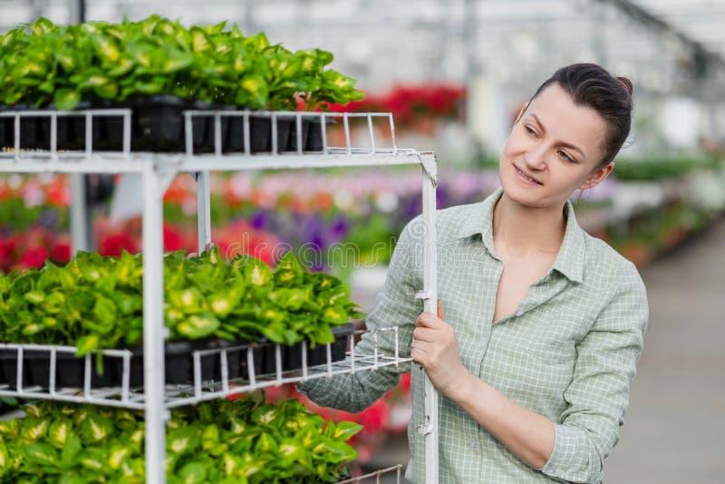 Mujer morena joven atractiva en camisa de tela escocesa verde El trabajador del invernadero se coloca al lado de los estantes con fotos de archivo libres de regalías