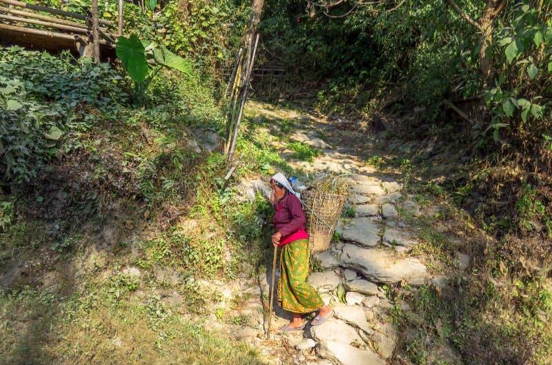 Mujer nepalesa que lleva una cesta en ella detrás que camina abajo de un sendero rocoso fotos de archivo